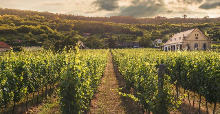 Illustration de l'article [ Tourisme ] Découvrir le Vignoble en groupes