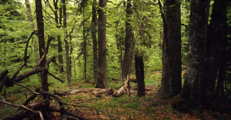 Illustration de l'article Herige soutient les projets du WWF pour une gestion durable des forêts